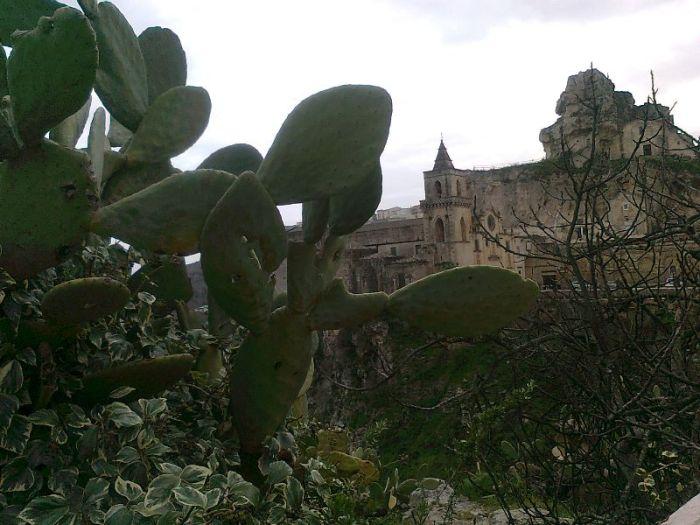 sassi kaktus