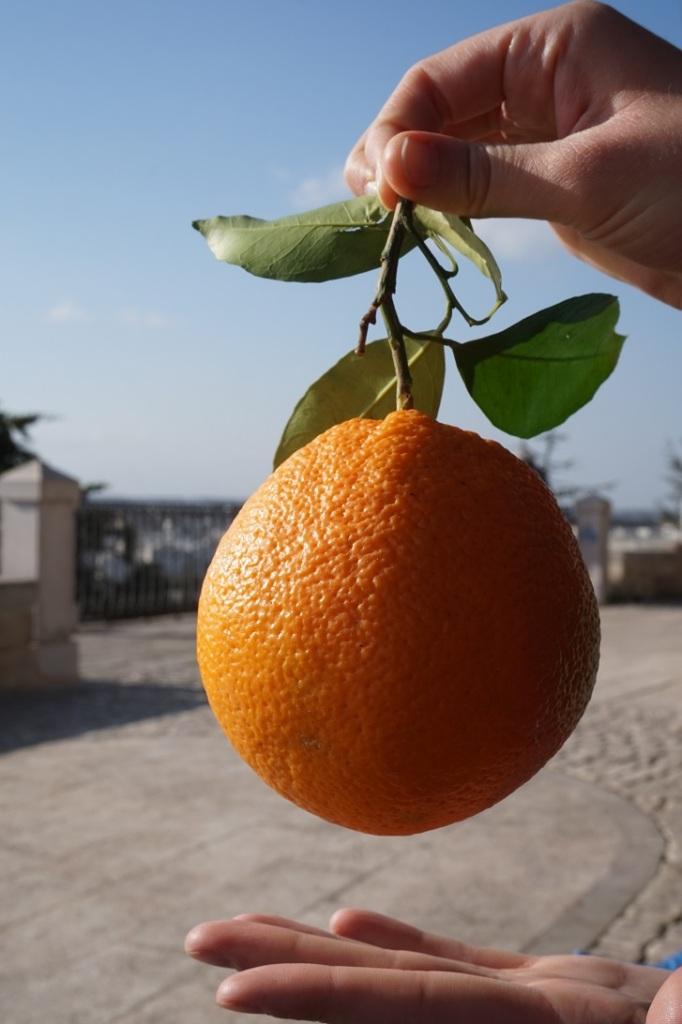 pomarańcza prosto z  włoskiego ogrodu